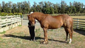 Equine body language