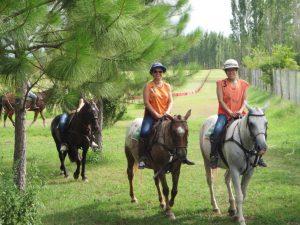 Horses in Argentina