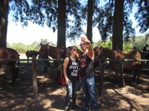 Horses Polo Argentino