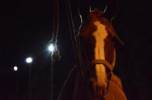 Horses Vision
