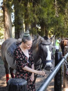 Safety precautions when grooming your horse