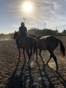 MYTHS ABOUT HORSEBACK RIDING