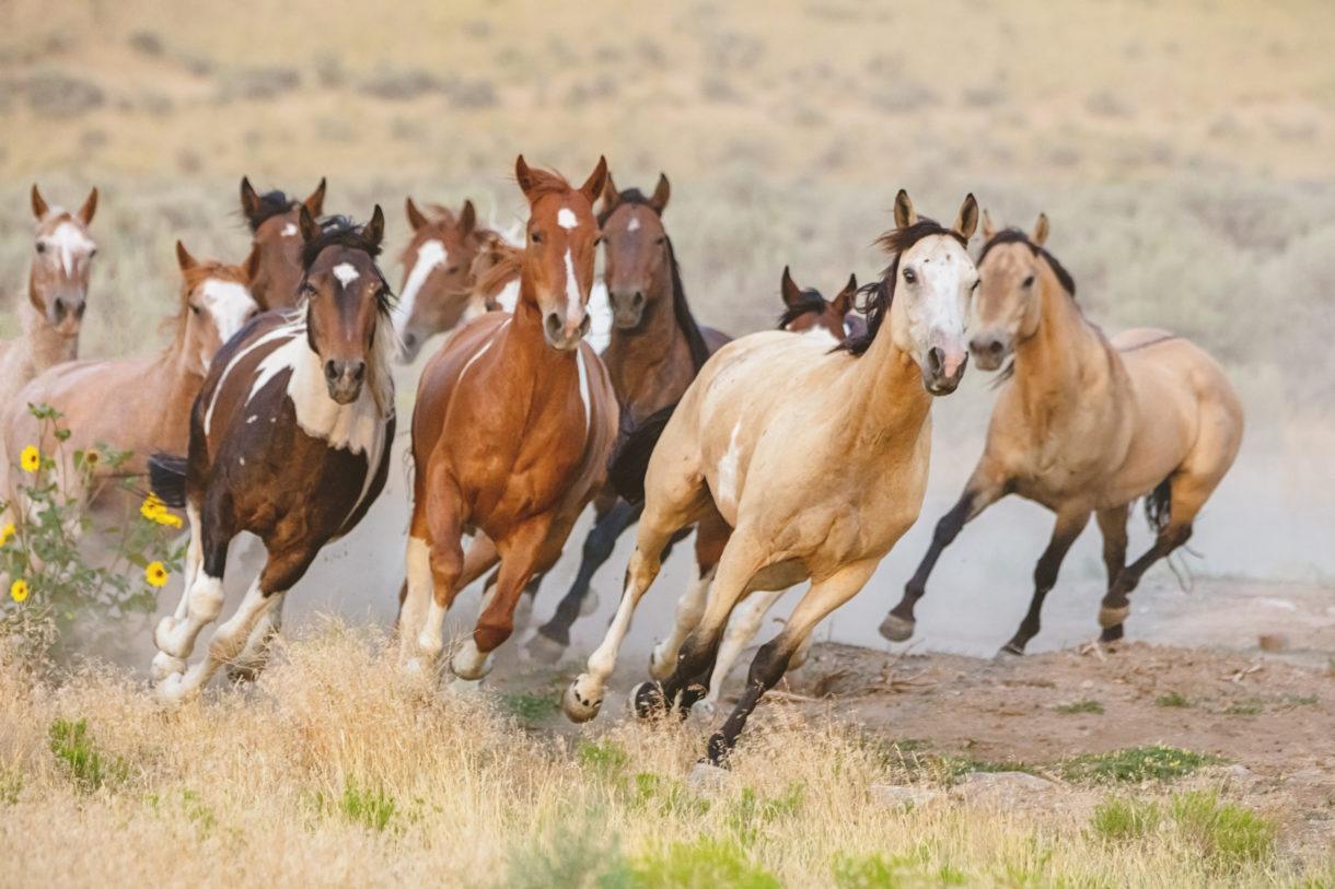 Basic care of horses