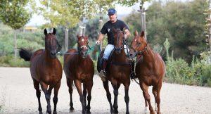 petisero and polo horses
