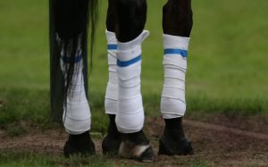 bandages and protectors for horses