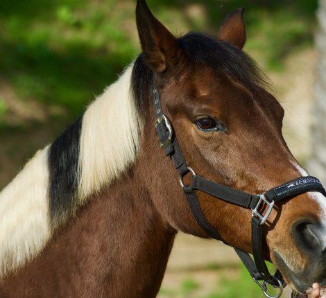 horse psychology