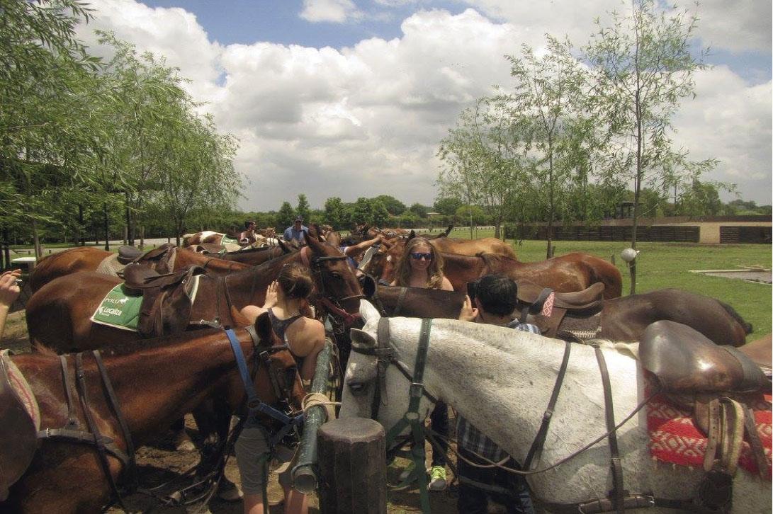 Horses curiosities