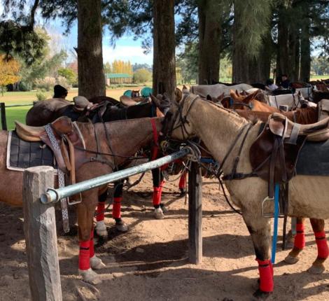 horses with saddles